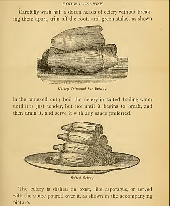 boiled_celery-corson_1886