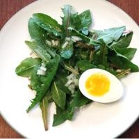 Dandelion Salad ~1844