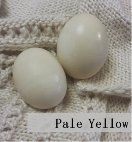 Pale-Yellow-Eggs2