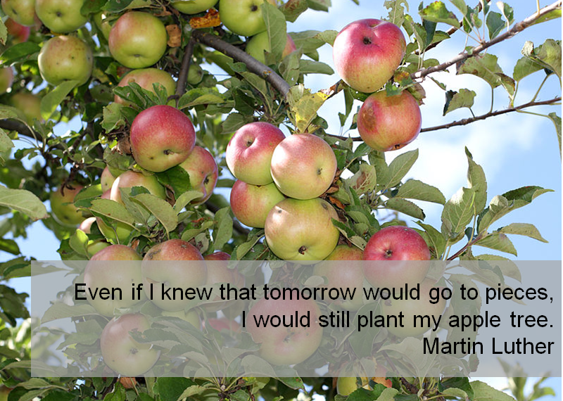 Martin Luther Apples Quote