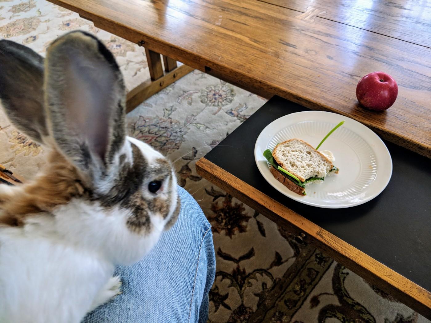Rabbit eating my sandwich Nasturtium-Sandwhich-Rabbit