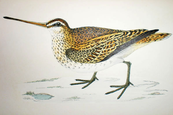 Snipe-Fawcett-1851-1857