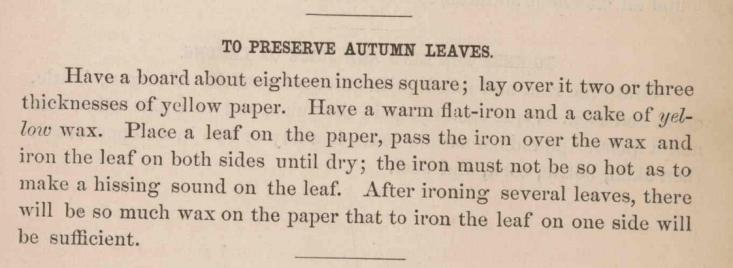 Preserve_Autumn_Leaves