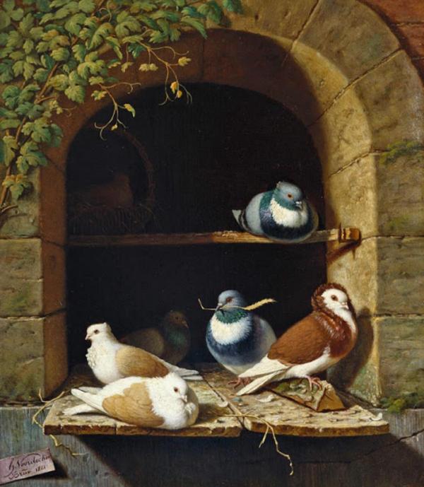 Pigeons_Henry-Voordecker_1841