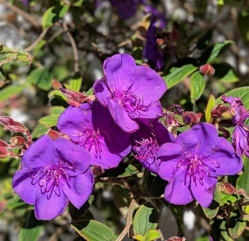 Purple Flowers-Spring