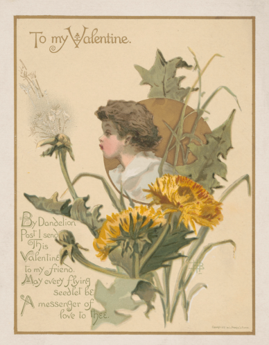 To My Valentine Dandelion Post 1882