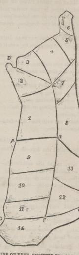 Cut-of-beef-1860s-sketch