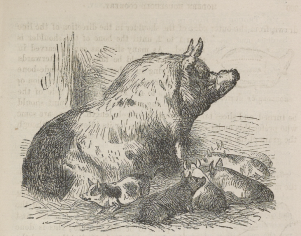 Hogs-Mrs-Beeton