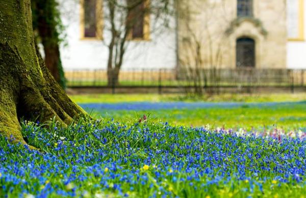 Bluebells Garden