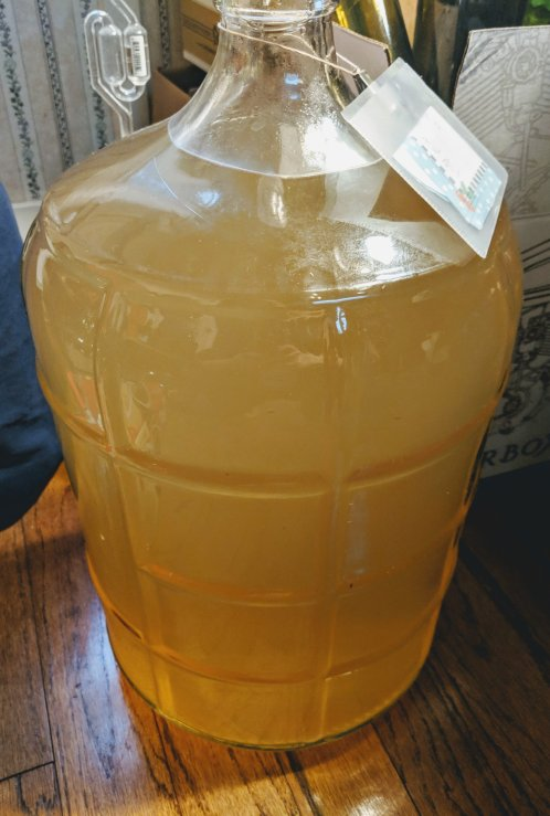 Ginger-wine-carboy