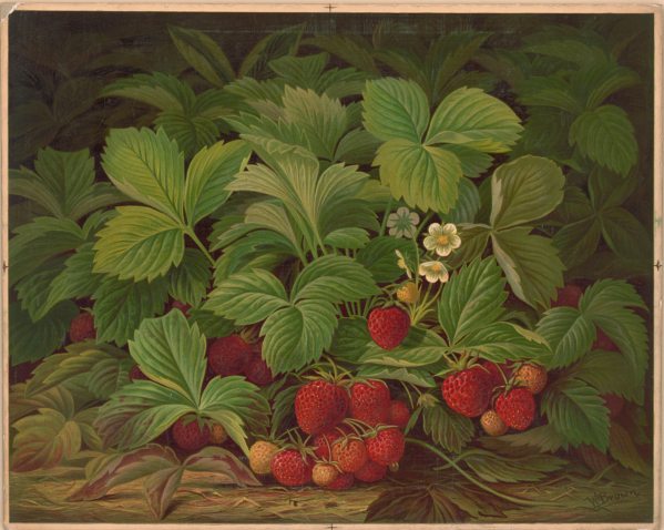 Hatch & Co., printers Strawberries 1867