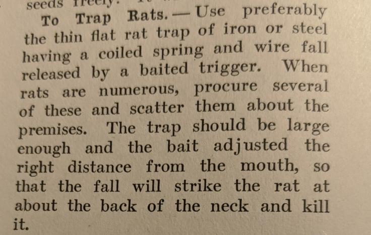Rat Trap 1
